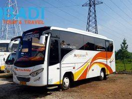 Daftar Harga Sewa Bus Pariwisata di Sidoarjo Terbaru